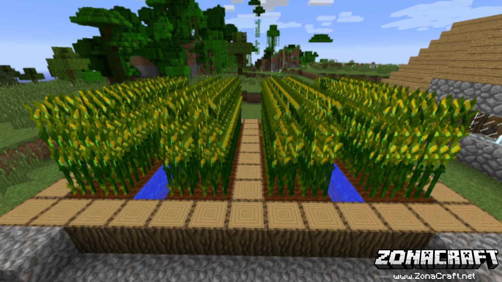 Simple-Corn-Mod-1